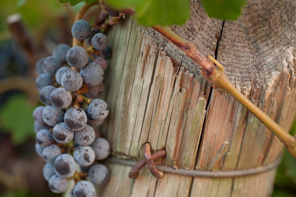 Kiepersol Vineyards & Winery